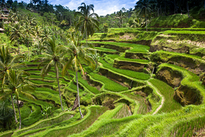 Indonesia_Bali_Sights_shutterstock_136180889.png