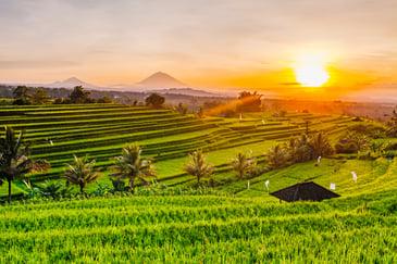 Indonesia_Bali_shutterstock_539558284