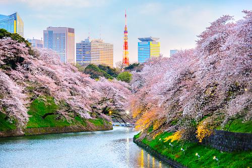 Japan_Tokyo_shutterstock_577077346.png