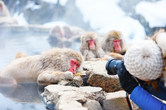 Japan_Yudanaka_Snow_Monkeys_shutterstock_261024554.png