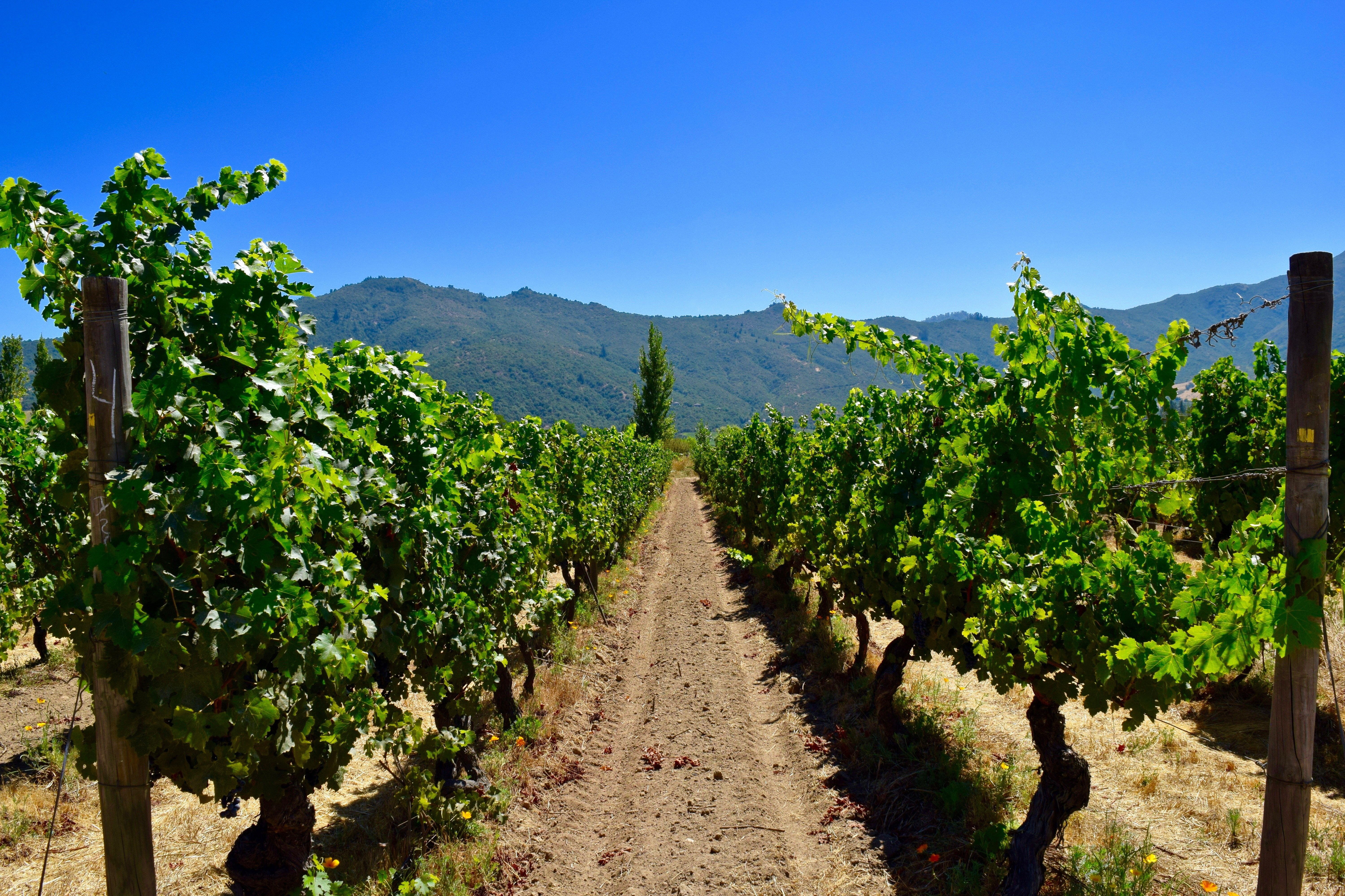 chile_wine_shutterstock_592752578