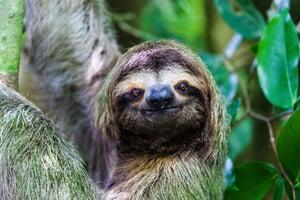 slothshutterstock_1024620259